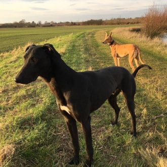 BOTH REUNITED ❤️Police are appealing for information after two dogs were stolen from an address in #Chelmsford