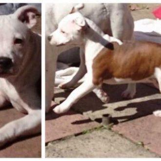 Puppy RUBY stolen from garden in Leeds, 8th July'17