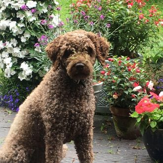 ELLA missing from Ansty, Coventry, 8th July'17