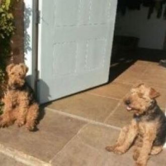 SWEET PEA & GYPSY REUNITED ❤️ disappeared while on a walk, Norfolk on 17th July 2017