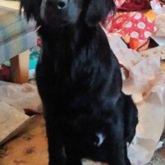 RIP CHARLIE 💔 CHARLIE missing dog Dorridge Park, Birmingham on 13th January'17.